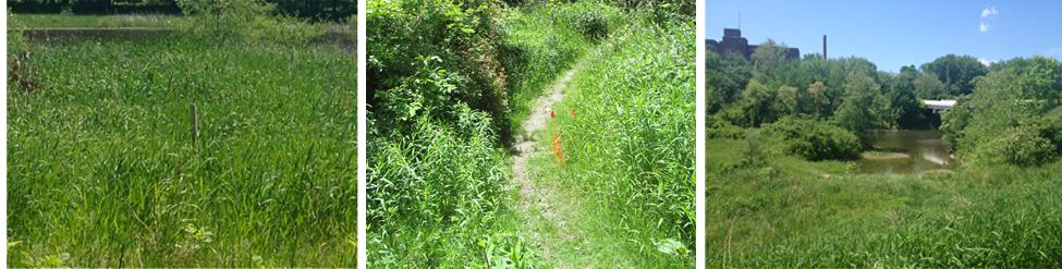 before-wetlands